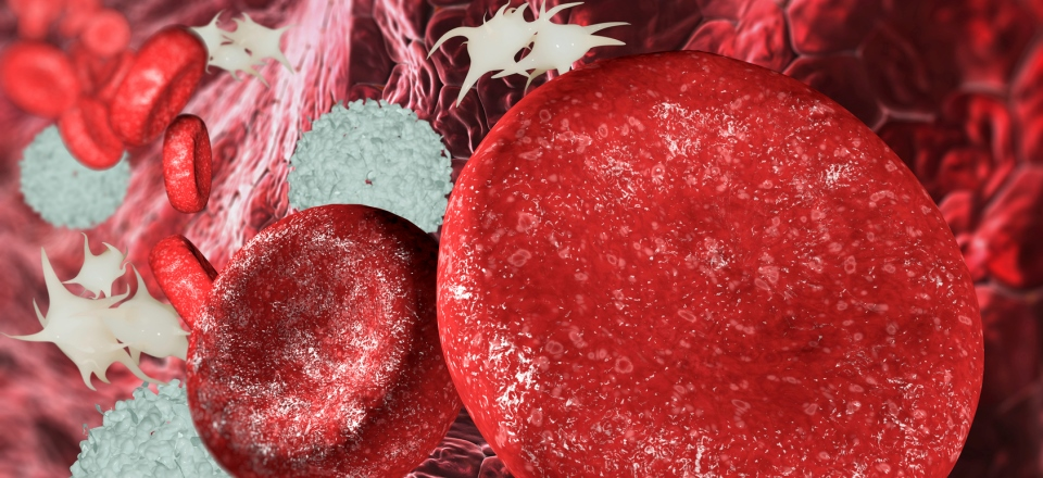 bone marrow transplants replaces blood cells