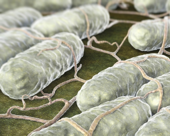 Bacteria can be used to deliver cancer treatment